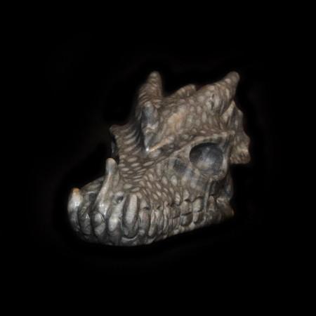 Fossil Coral Dragon Skull Head