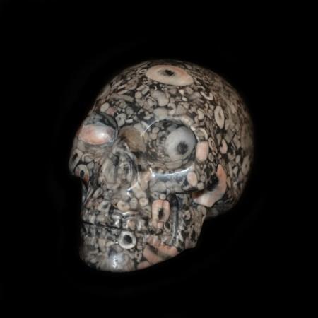 Fossil Crinoid Evil Eye Skull