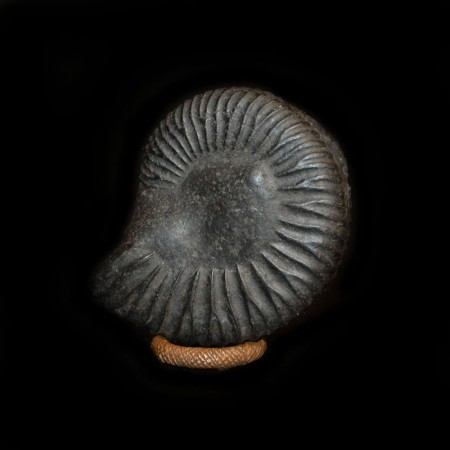 Salagram Ammonite from Nepal