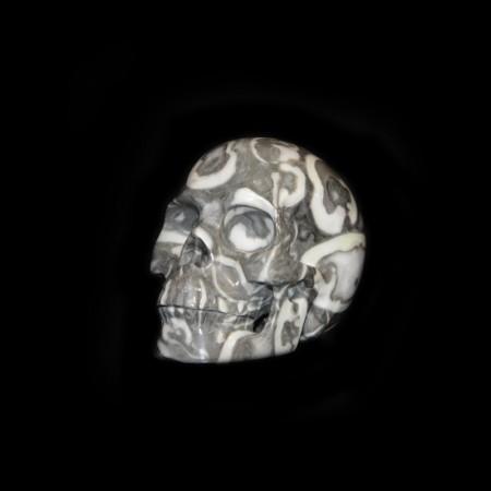 Fossil Stone Skull