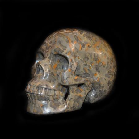 Versteinerter Fossil Totenkopf