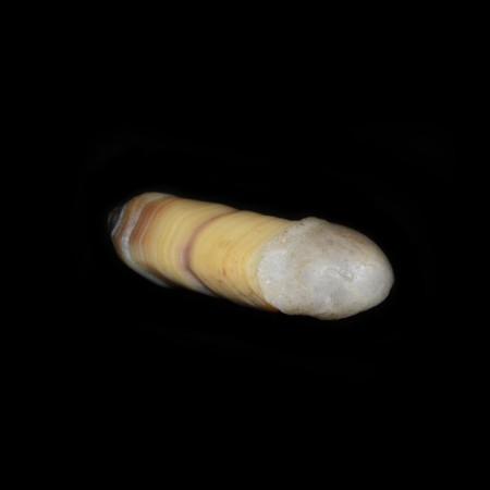 Natürlich gewachsener Gobi Achat Penis